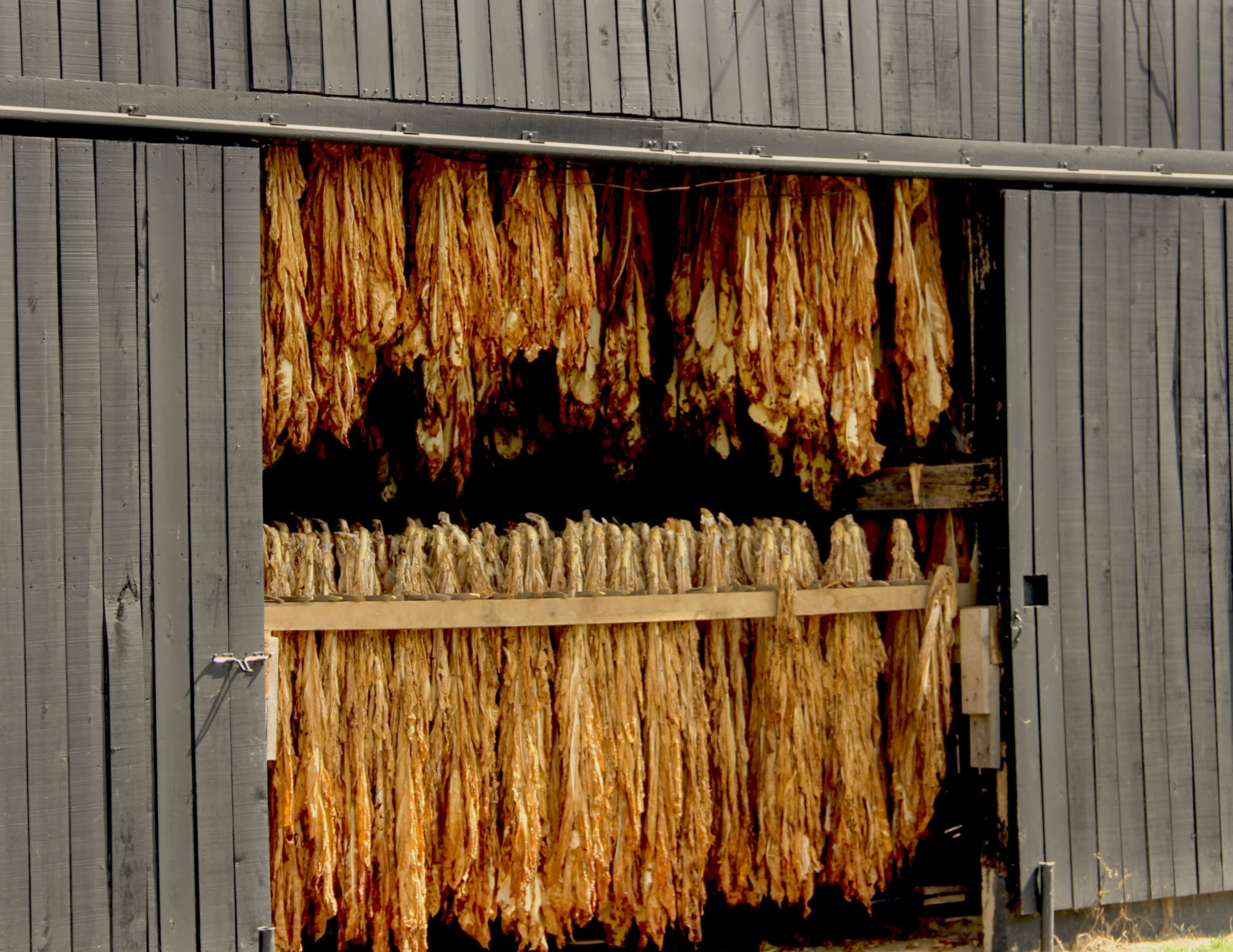 Tobacco is one of Kentucky's top five agriculture exports.