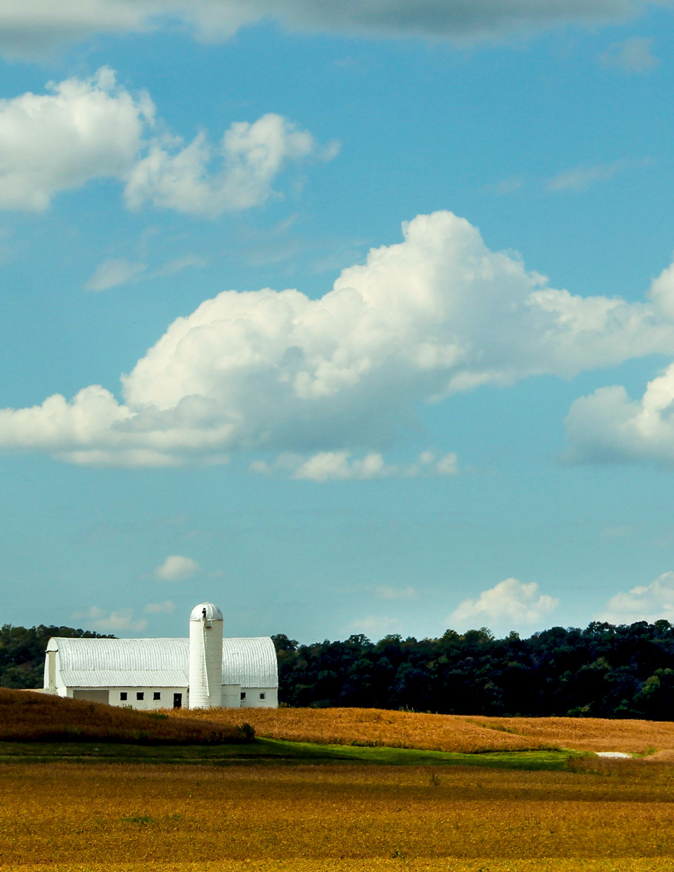 White barn and silo across a golden wheat field