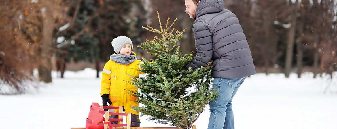 Christmas tree safety tips blog