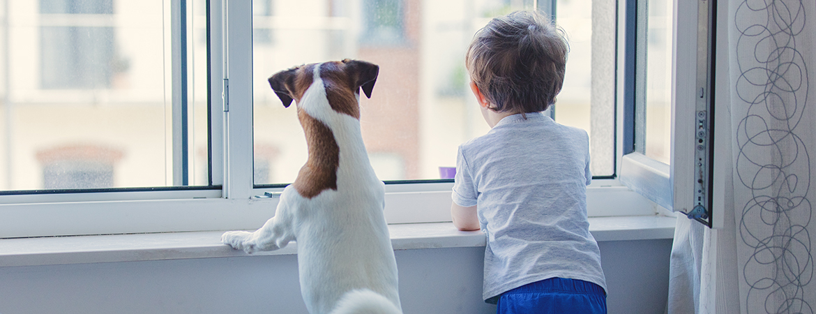 7 tips for window safety blog