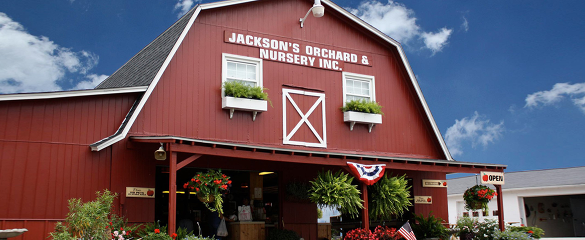 Jacksons Orchard and Nursery