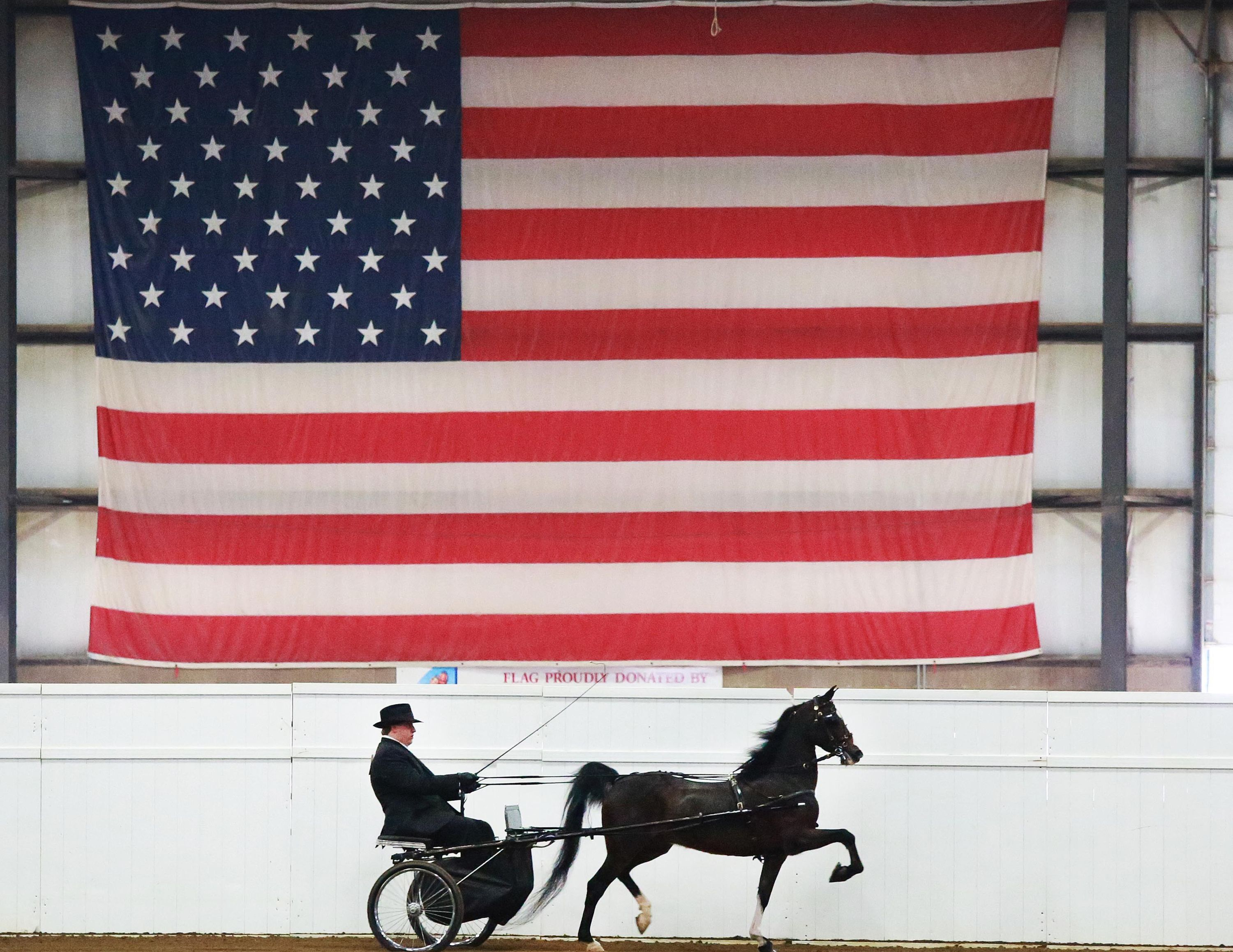 Horse Trotting in front of American Flag