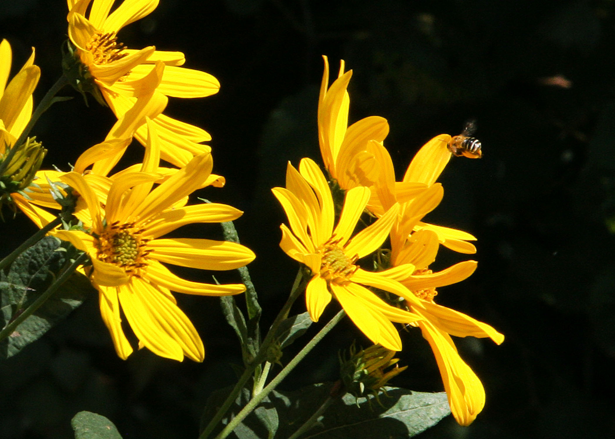 According to information from the USDA's Natural Resources Conservation Service, three-fourths of the world's flowering plants and about 35 percent of the world's food crops depend on animal pollinators to reproduce.