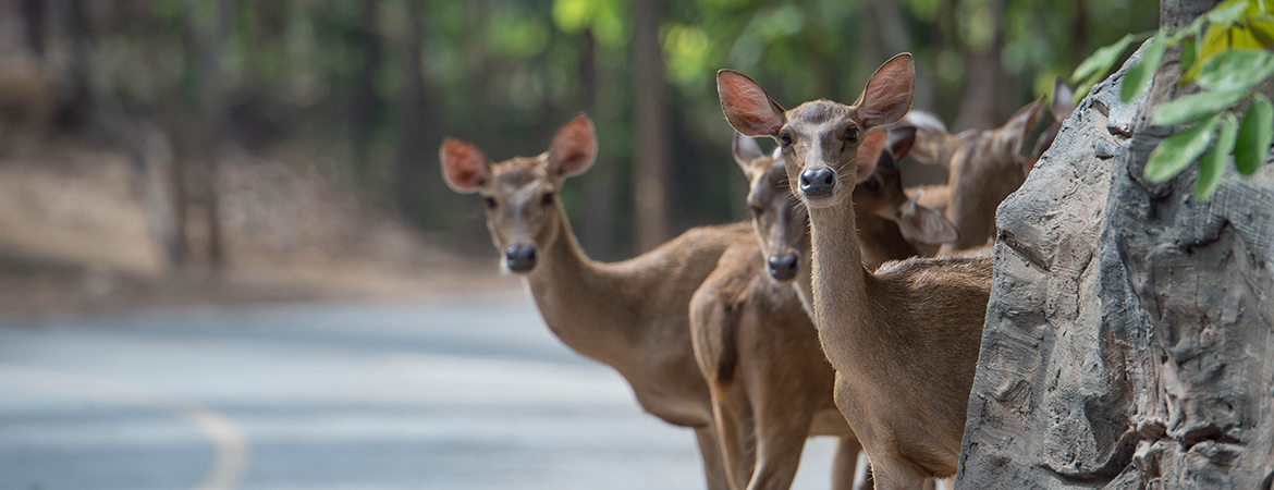9 tips for avoiding a deer collision this fall blog