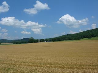 Kentucky Wheat Field (Market Updates 2)