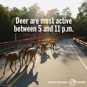 deer collision tip 3.jpg