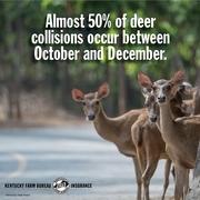 deer collision tips.jpg