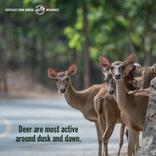 Tips for avoiding a deer collision