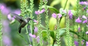 Kentucky Pollinator Protection Plan