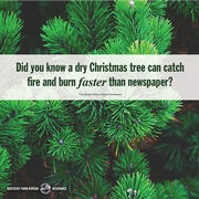 Christmas tree tips.jpg