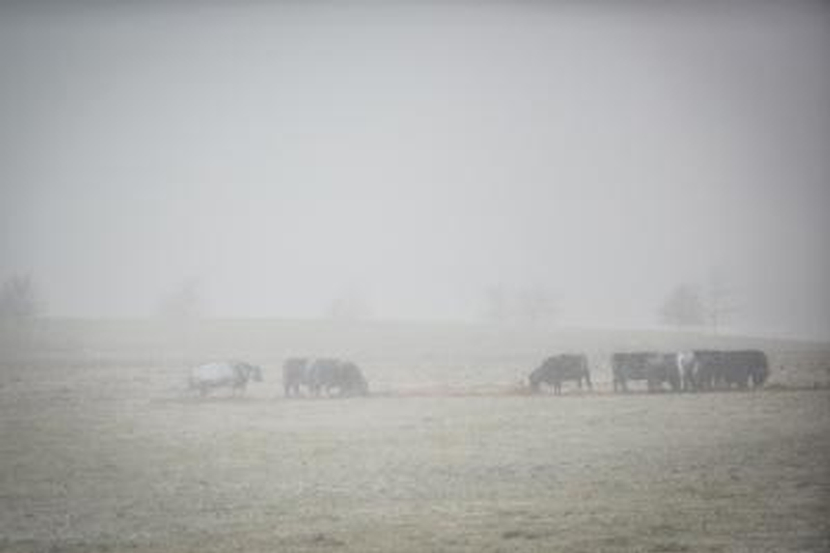 Getting through winter cold can be stressful for farm animals