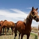 New state database lists lost, abandoned horses