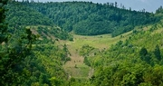UK forestry department celebrates National Forest Products Week – all year long