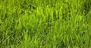 Time to repair, establish home lawns