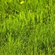Time to repair, establish home lawns
