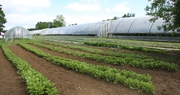 Produce aplenty at Double Hart Farm