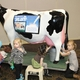 Young Farmer Conference  . . .