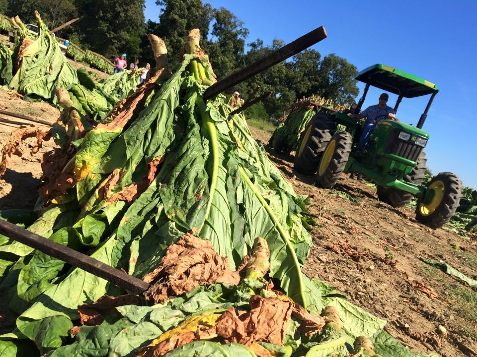 Farmers Life Insurance >> Kentucky Tobacco Still No.1 for Some Farm Families - Kentucky Farm Bureau