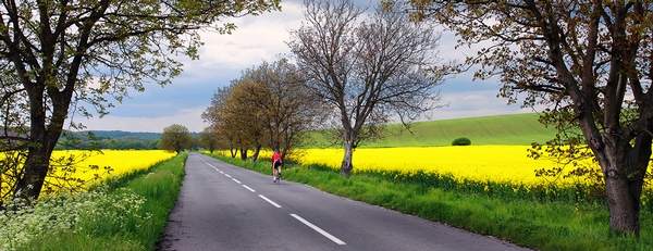 14 ways to share the road with bicycles