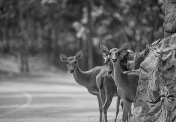 Oh, deer! Kentucky's peak deer strike season returns