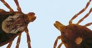 University of Kentucky Entomologist talks tick prevention