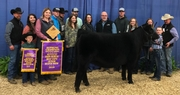 Angus Lead the Way in 33rd Annual Winter Beef Showcase