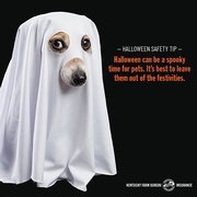 trick-or-treating safety 2.jpg