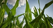 AFBF joins groups in new crop insurance agreement