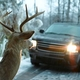 Oh deer! Kentucky's peak season for deer collisions returns