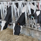 Kentucky Host Conference and Expo on Precision Dairy Farming  for the First Time