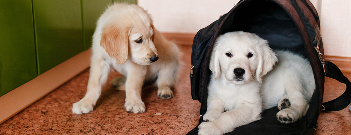 Pet prep: 8 ways to ensure your furry friend's safety during an emergency